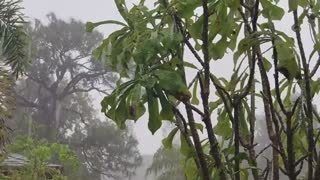 1 HOUR of Gentle Night RAIN, Rain Sounds for Relaxing Sleep, Meditation, Study