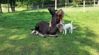 Spoons the orphaned foal getting a massage