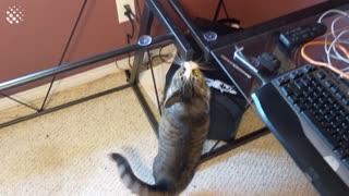 Hilarious Cat Viral Videos compilation