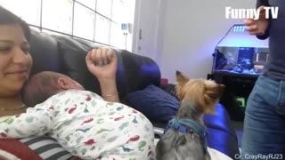 Perros protegiendo a sus dueños
