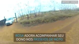 Papagaio acompanha motociclista em viagem
