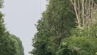 Helicopter Chainsaw Trims Through Trees like Butter