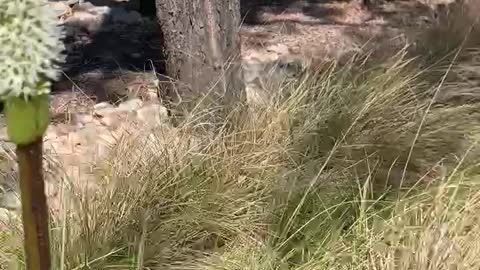 Grass Tree & Sugarbag bees