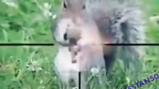 Watch the war between the dog and the squirrel Hehehe🤣