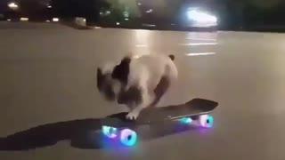 Smart Dog Goes Skateboarding