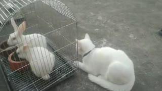 Beauty of Cat And Rabbits Melting Hearts