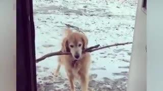 Funny Animal Video 2021