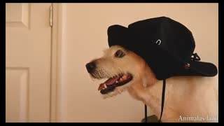 funny🐶 dog wearing a hat|