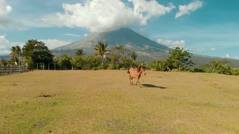 Amazing Arabian Brown Horse In Fresh Windy Farm