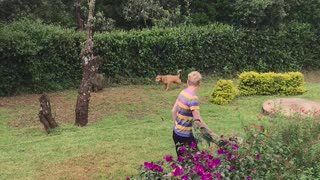 Dog Chasing off a Baboon