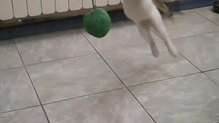 Slow motion kitten jump