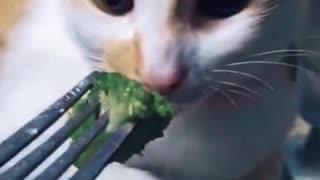 CUTEST Cat On Tiktok