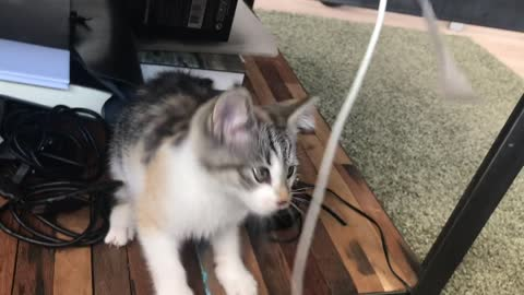 A playful cute Kitten& funny