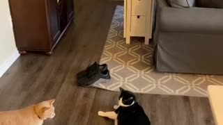 Smart Kitty Knows When to Stop