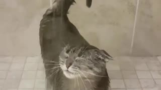 Cat's Grooming Habits | I don't need you DAD :)
