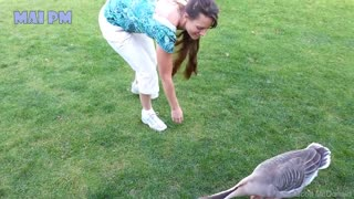 Super Funny Moments Human and Animal