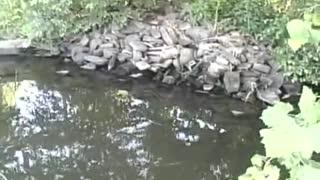 Schuylkill River Bass Fishing