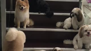 Well Trained Pups Wait for Their Treat
