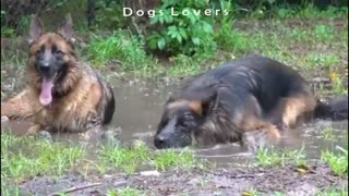Two Dogs Sitting On The Floor in The Water.