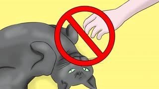 How to help your cat with Epilepsy