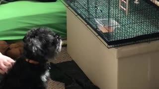 Puppy watching kiddos birds