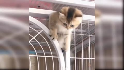 funny cats compilation part-21.