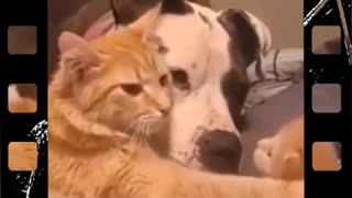 A minute of humor with cats