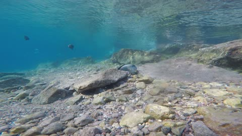 Fish swim in the Red Sea, colorful fish, Eilat Israel 2