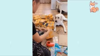 Cutest puppies you will ever watch