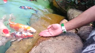 Feed fish in the aquarium in the morning