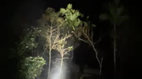 Firework in the jungle