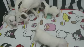 Puppy Playing with his kids