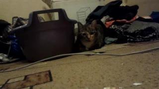 Creepy cat attack