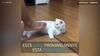 Este gato tem aversão ao chulé!