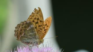 Most Beautiful Butterflies on Earth
