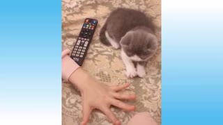 Adorable and amusing cats