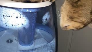 Kitty Hogs Humidifier