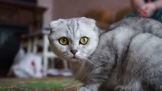 A Close Up Shot Of Cat
