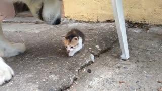 Dog Scared Of a Kittenn