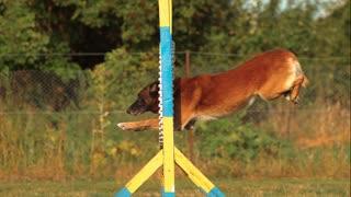 Dog training video 5