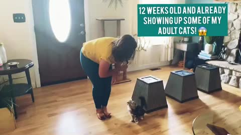 Wait what? How did this kitten learn this?