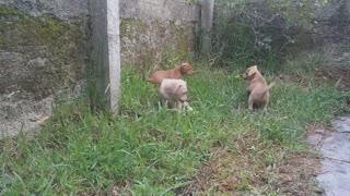 3 Puppies Princess