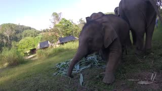 Up close and personal with a family of Asian Elephants in Thailand