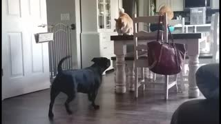 How cat and dogs fight!!!