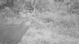 young 4 point checking the wind