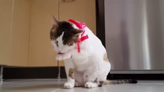 Funny Cat Video Scene