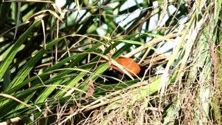 Bird walking through dry grass - With great music