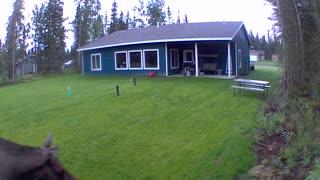 Moose!! Don't go outside yet !!