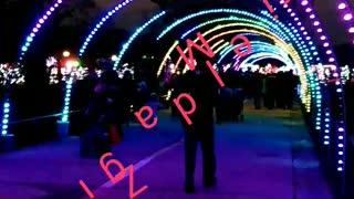 Brookfield Zoo 🎅 Christmas 🎄 Light display