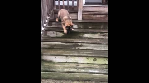Evo is so happy once he makes it down the stairs!